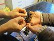 Starostlivosť o nájdené netopiere