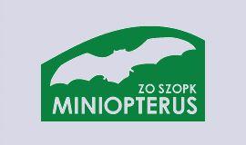 Miniopterus